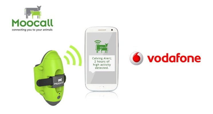 Moocall shares its story at Vodafone 'Internet of Farming Things'​