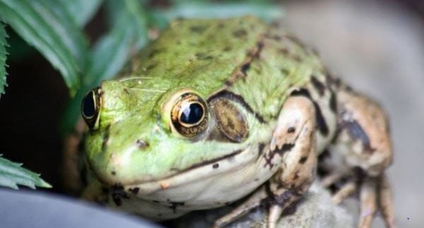 'Looking after your frog' – Ten tips on how to avoid IT project failure